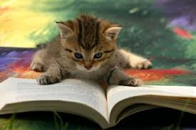 Cats & Kittens Reading Books (18 Pictures)